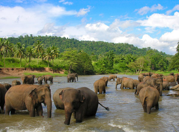 Отдых-Шри-Ланка-6
